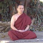 The monk Sīla Vanta in meditation posture at the foot of a big tree